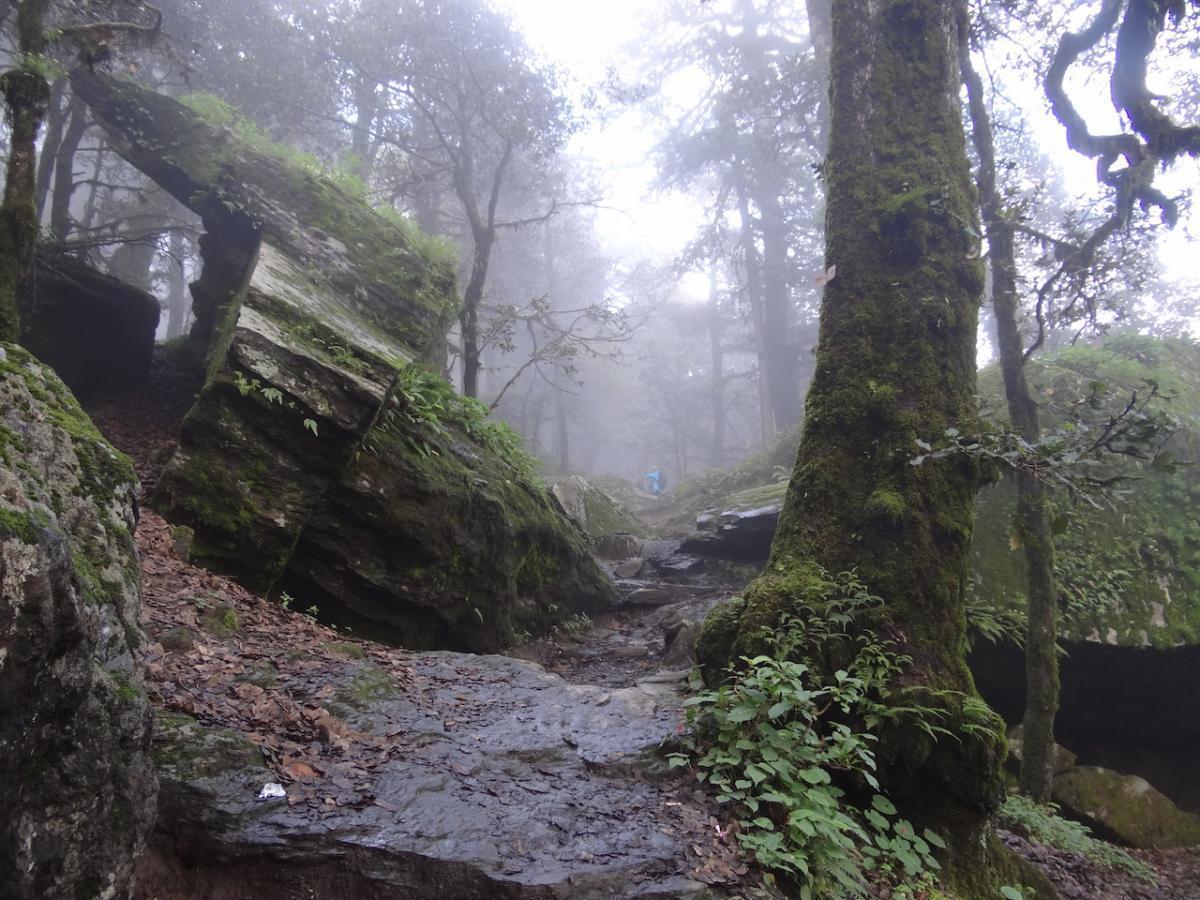 Dalej ścieżka wiedzie przez las
