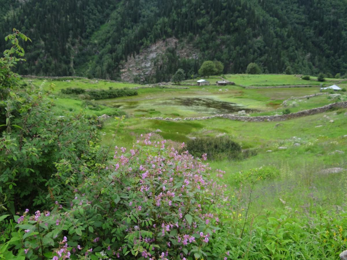 Jezioro kwiatów