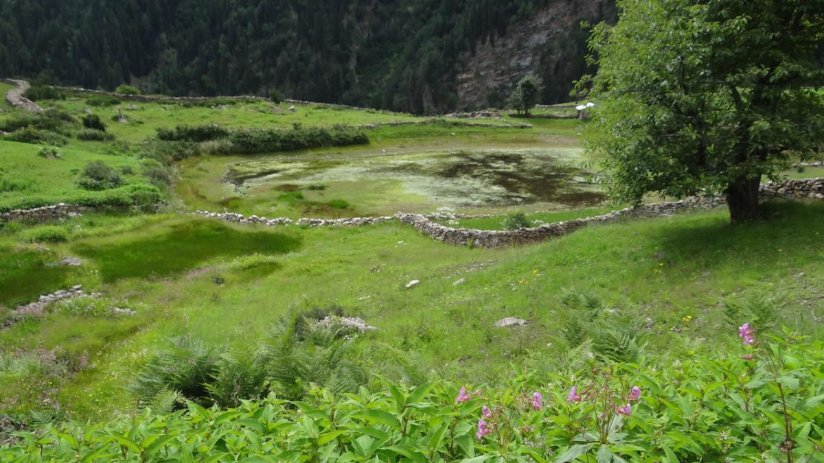 Jezioro kwiatów - tutaj odbywa się najważniejsza ceremonia górskiego święta - Święta Kwiatów zwanego Phulećh. Święto to jest uwieńczeniem lata i oznacza początek jesieni. Cała wieś - tzn. z każdego domostwa przy najmniej jedna osoba, wyrusza wysoko w góry, nawet do 4880 m. n.p.m., w poszukiwaniu rzadkiego kwiatu - Lotosu Brahmy (Brahma-kamal). Szukają tak długo, aż ktoś znajdzie się taki okaz, który ma dwa kwiaty na jednej łodydze (co jest niezwykle rzadkie). Wtedy wszyscy zrywają wszystkie kwiaty w okolicy i splatają z nich wieńce. Świętuje się nad tym właśnie jeziorem. Ozdabia się bóstwo girlandami i śpiewa pieśni zwane ukhyang. Wyrocznia bóstwa przepowiada przyszły rok. Wieczorem wracają w procesji do wsi do świątyni, gdzie śpiewają pieśni zwane santhang i tańczą. Festiwal trwa jeszcze następnego dnia. Jest to najważniejsze święto Kinnauru, a w tym miejscu świętuje się najhuczniej.