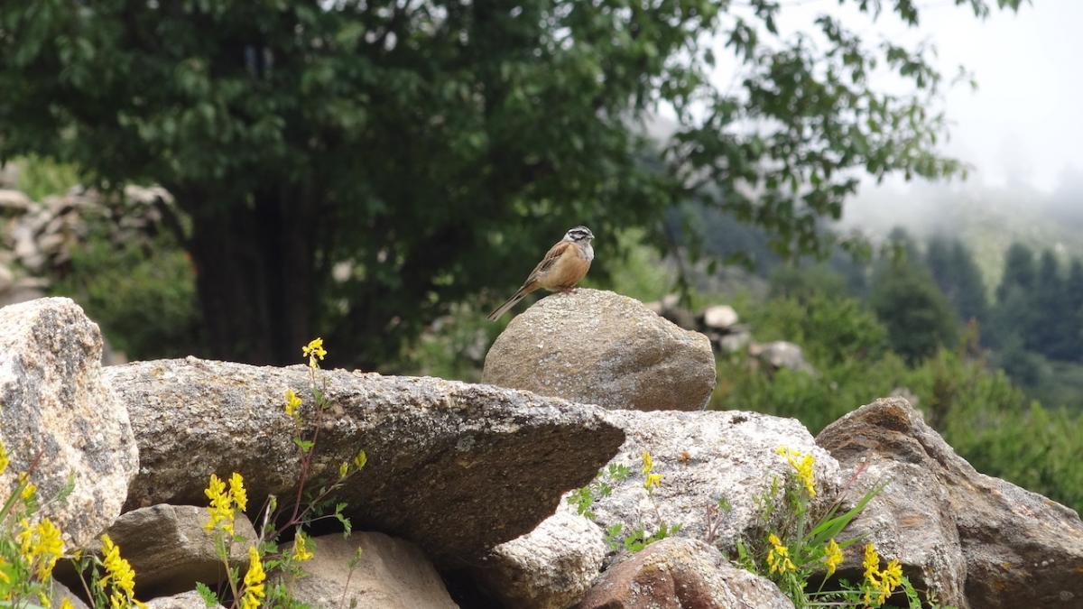 Dziekie ptaki nie uciekają od razu, można je z bliska zobaczyć